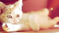 Как коты мяукают слушать онлайн бесплатно