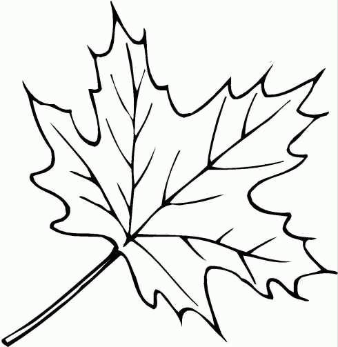 Кленовых листьев можно скачать