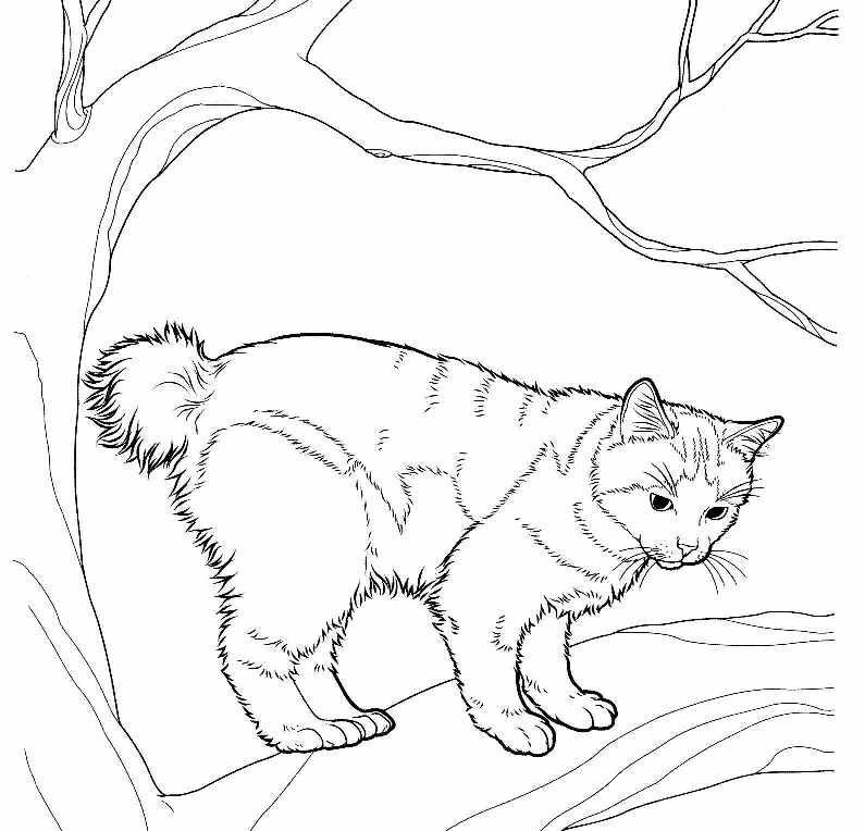 Раскраски кошек скачать бесплатно
