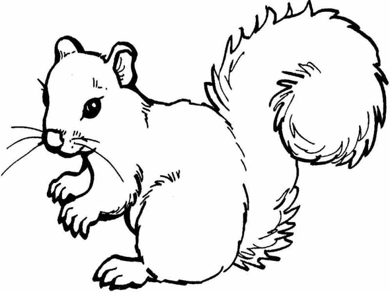 for Printable coloring pages of squirrels