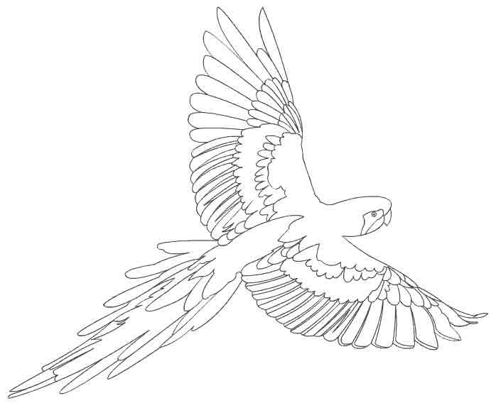Раскраски птицы скачать бесплатно