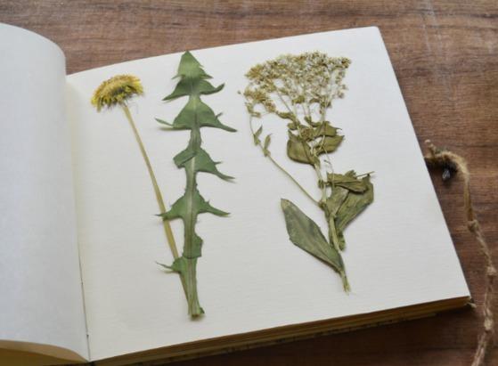 Как сделать своими руками гербарий