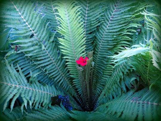 Фото цветов как папоротники