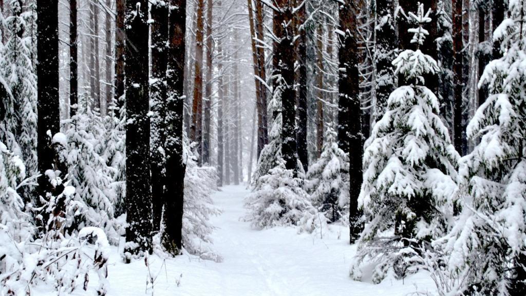 Скачать для детей звуки зимнего леса