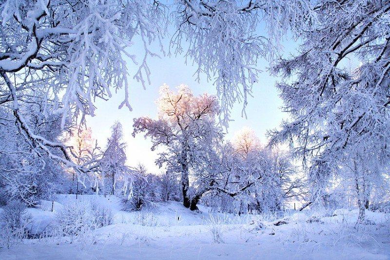 Картинки по запросу картинки зимнего леса
